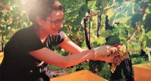 Hand picking the grapes